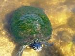 Zoo v3 - Turtle